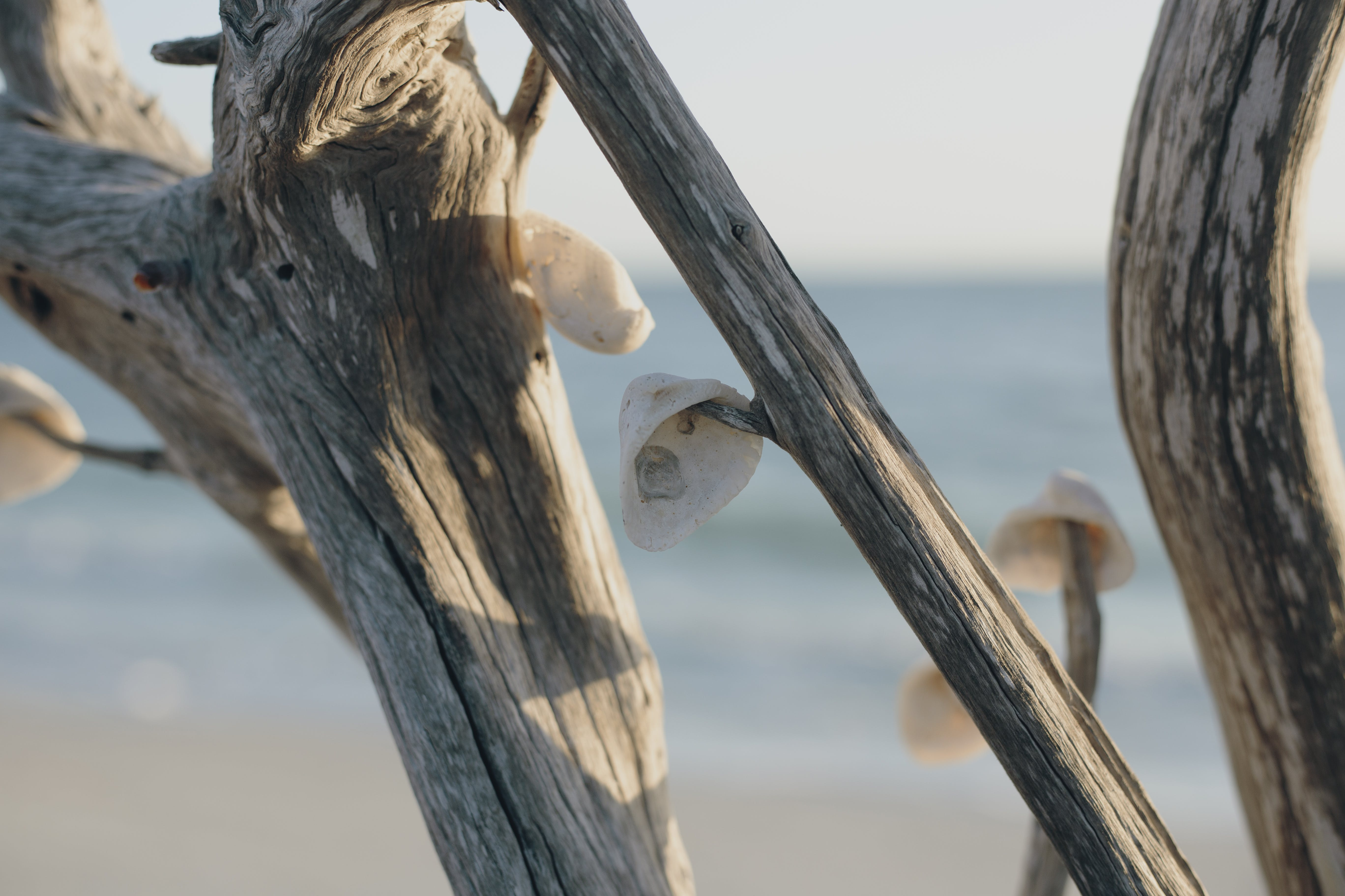 Tree Branch With Shells