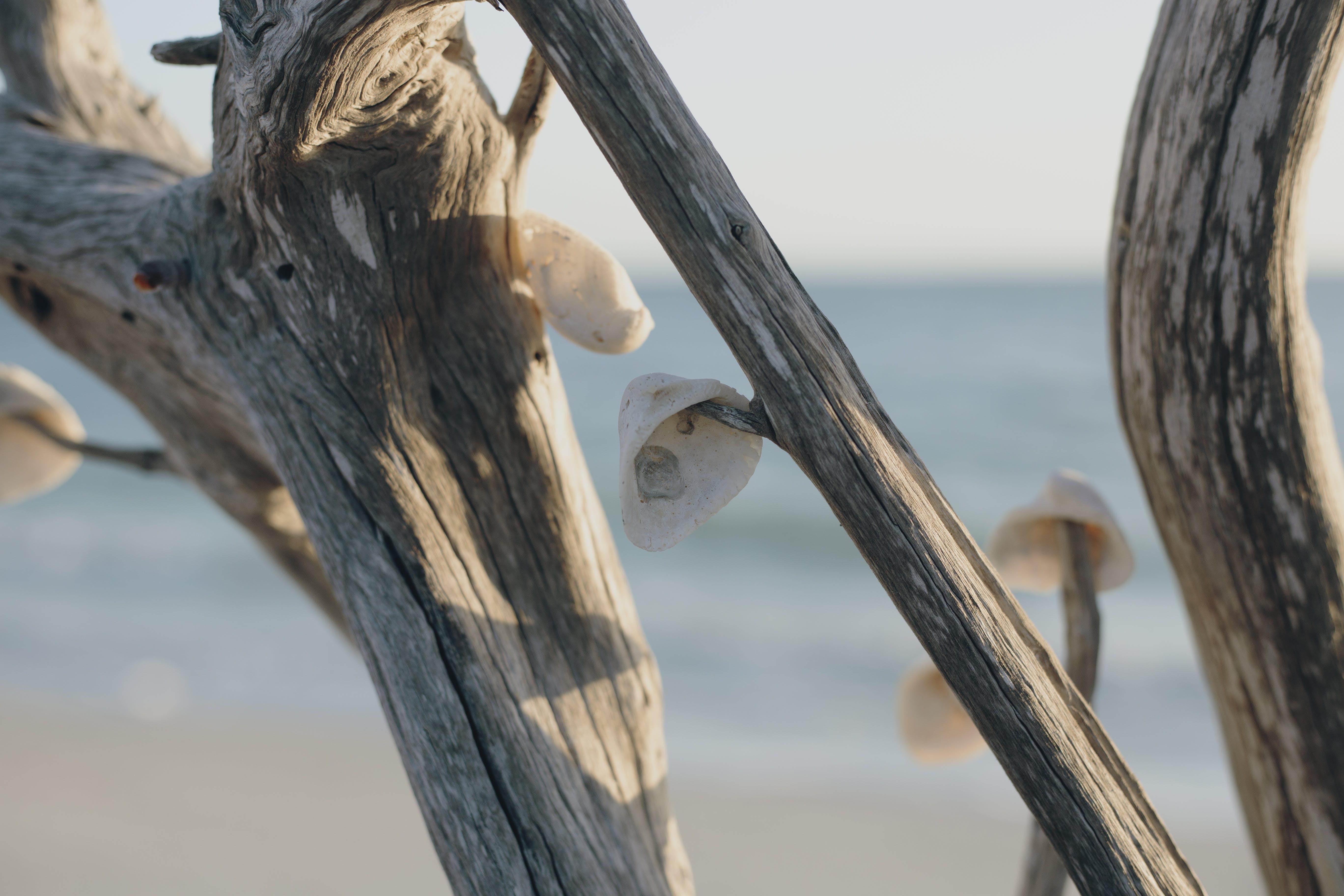 Kostnadsfri bild av dagsljus, hängande, skal, trä