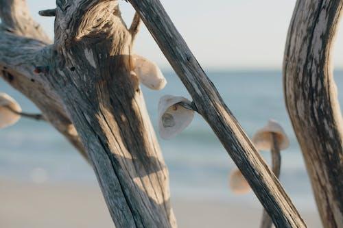 Ilmainen kuvapankkikuva tunnisteilla päivänvalo, puu, riippuminen, simpukankuoret