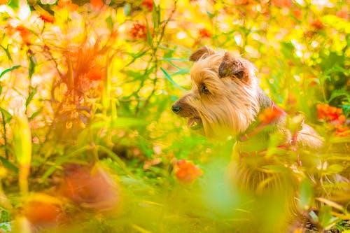 Foto d'estoc gratuïta de animal, cadell, fotografia d'animals, gos