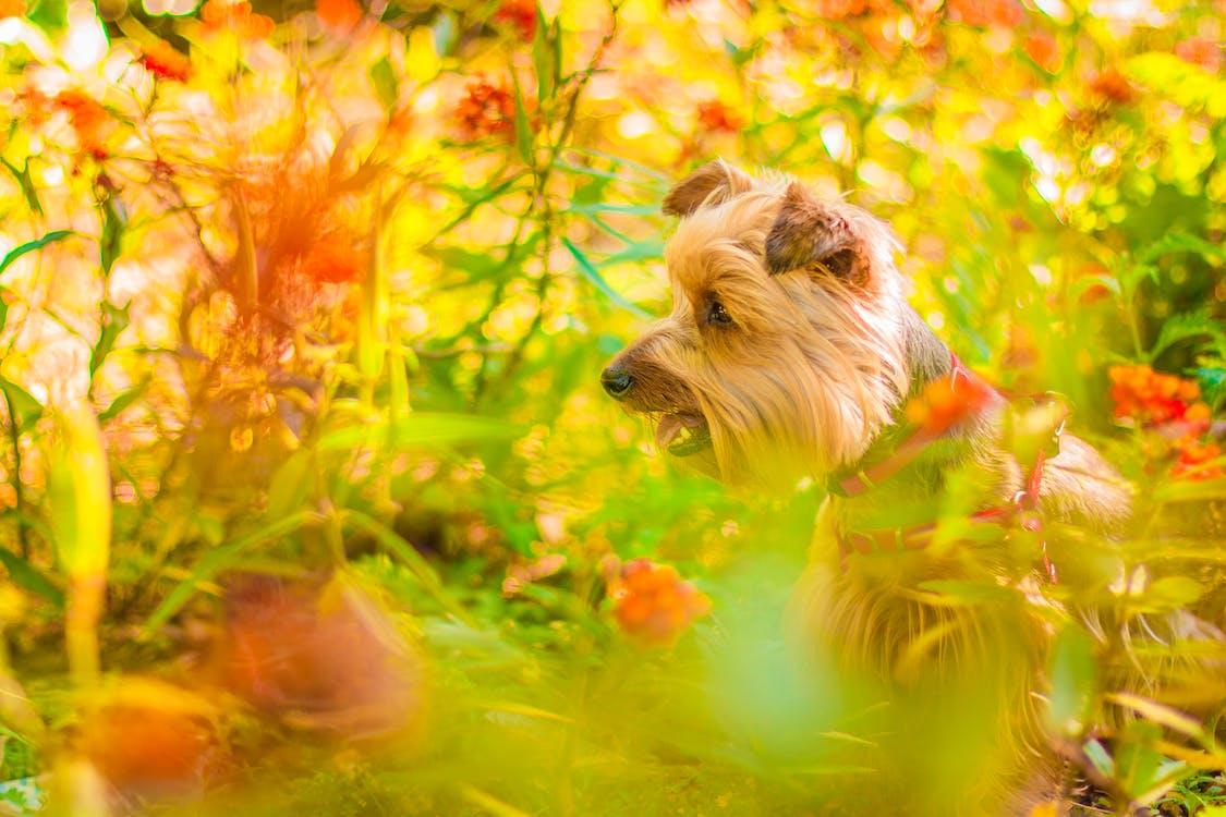 cây, chó, chụp ảnh động vật