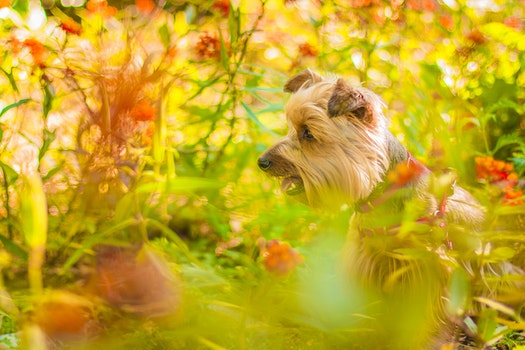 Brown Long Coat Dog Near Green Plants
