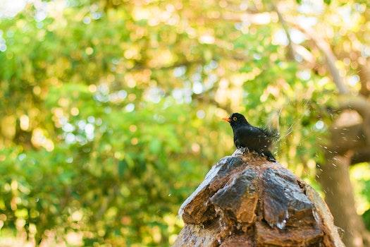 Black and Orange Bird on Brown and Black Tree Log