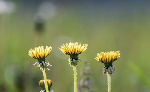 Darmowe zdjęcie z galerii z kwiaty