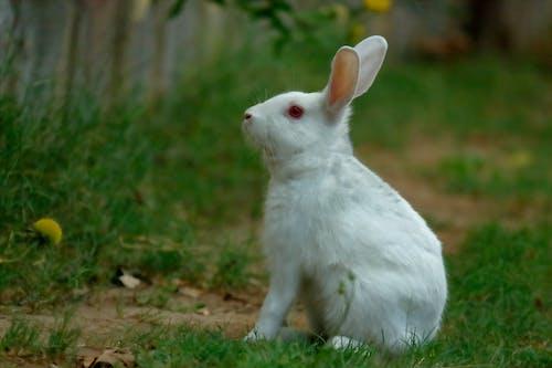 คลังภาพถ่ายฟรี ของ กระต่าย