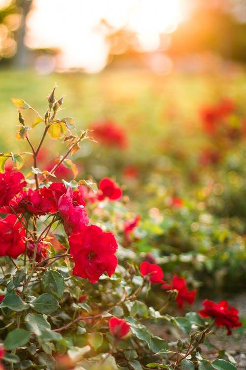 Foto d'estoc gratuïta de flora, florir, flors, macro