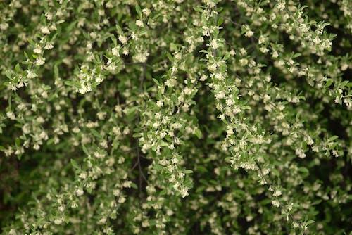 Бесплатное стоковое фото с белый, выращивание, заводы, зеленый