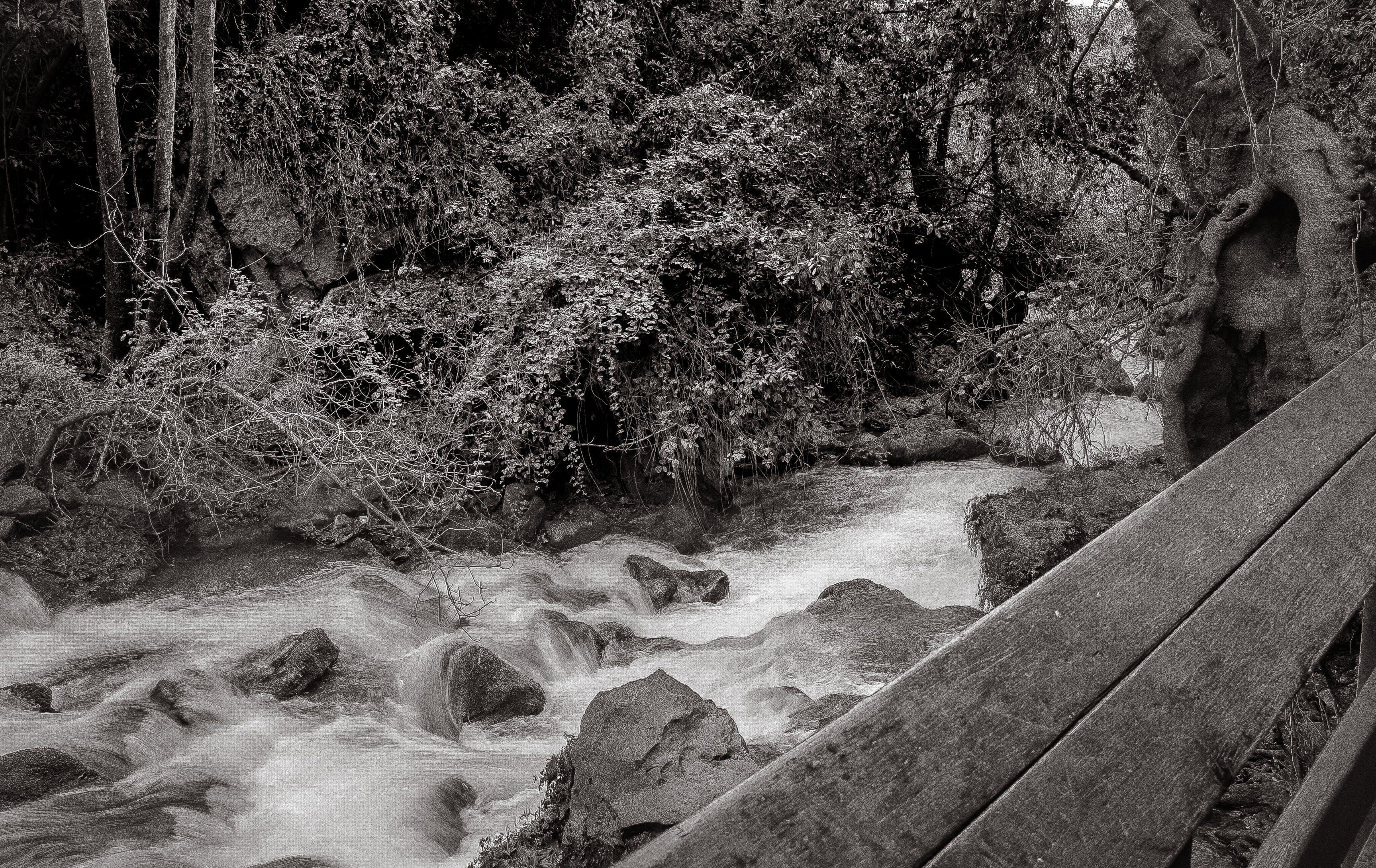 Δωρεάν στοκ φωτογραφιών με b&w, rock, βουνό, δέντρο