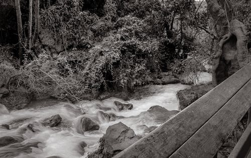 Grayscale Photo of River
