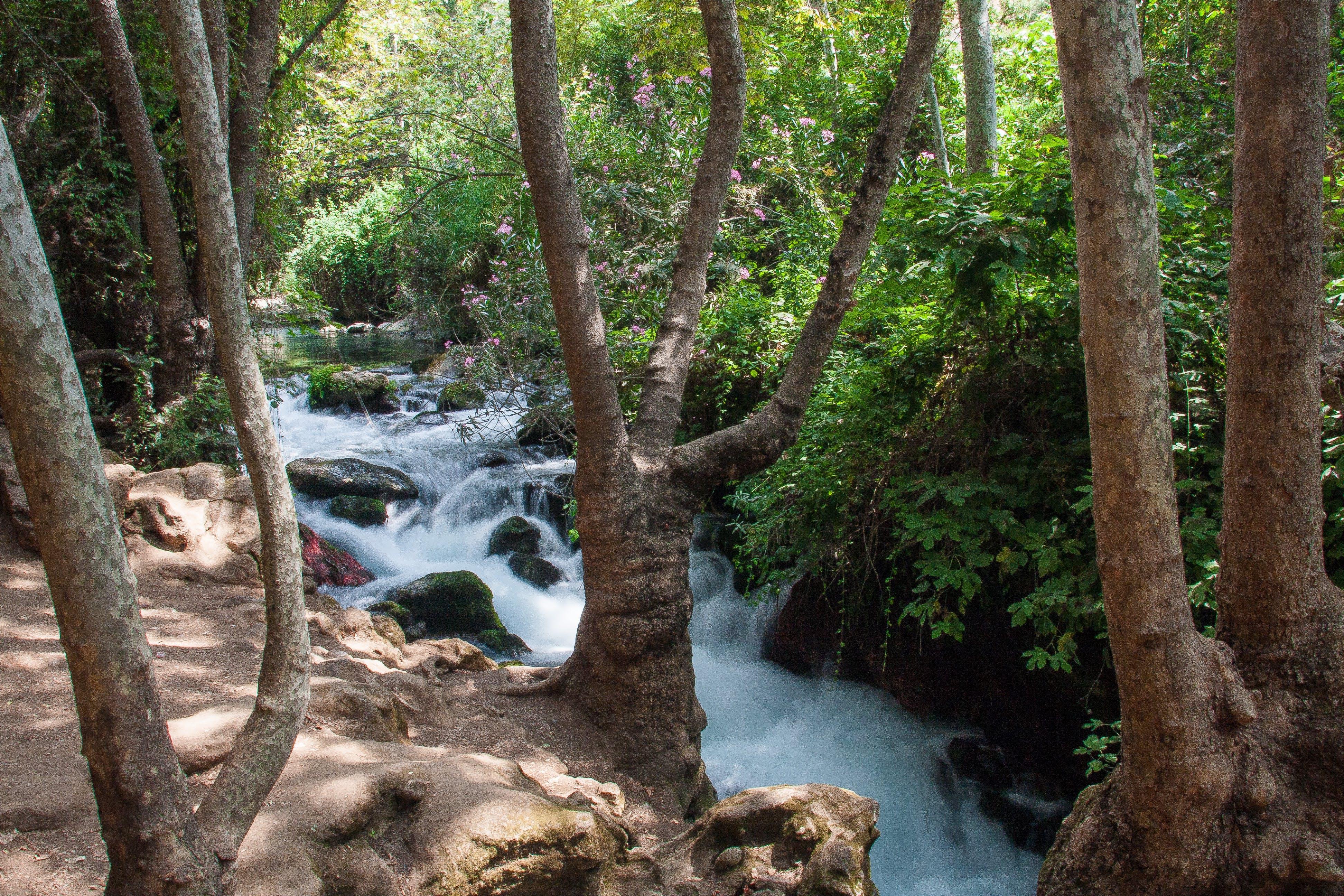 Free stock photo of nature, stream, water