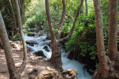 Fotos de stock gratuitas de agua, corriente, naturaleza