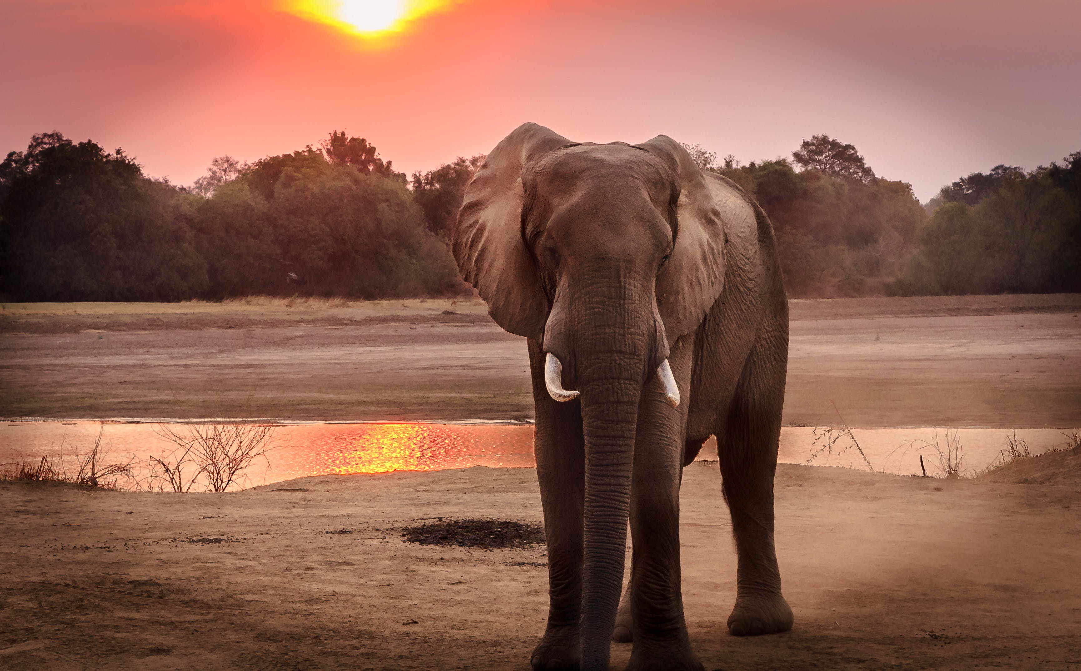 Wildlife Photography of Elephant during Golden Hour