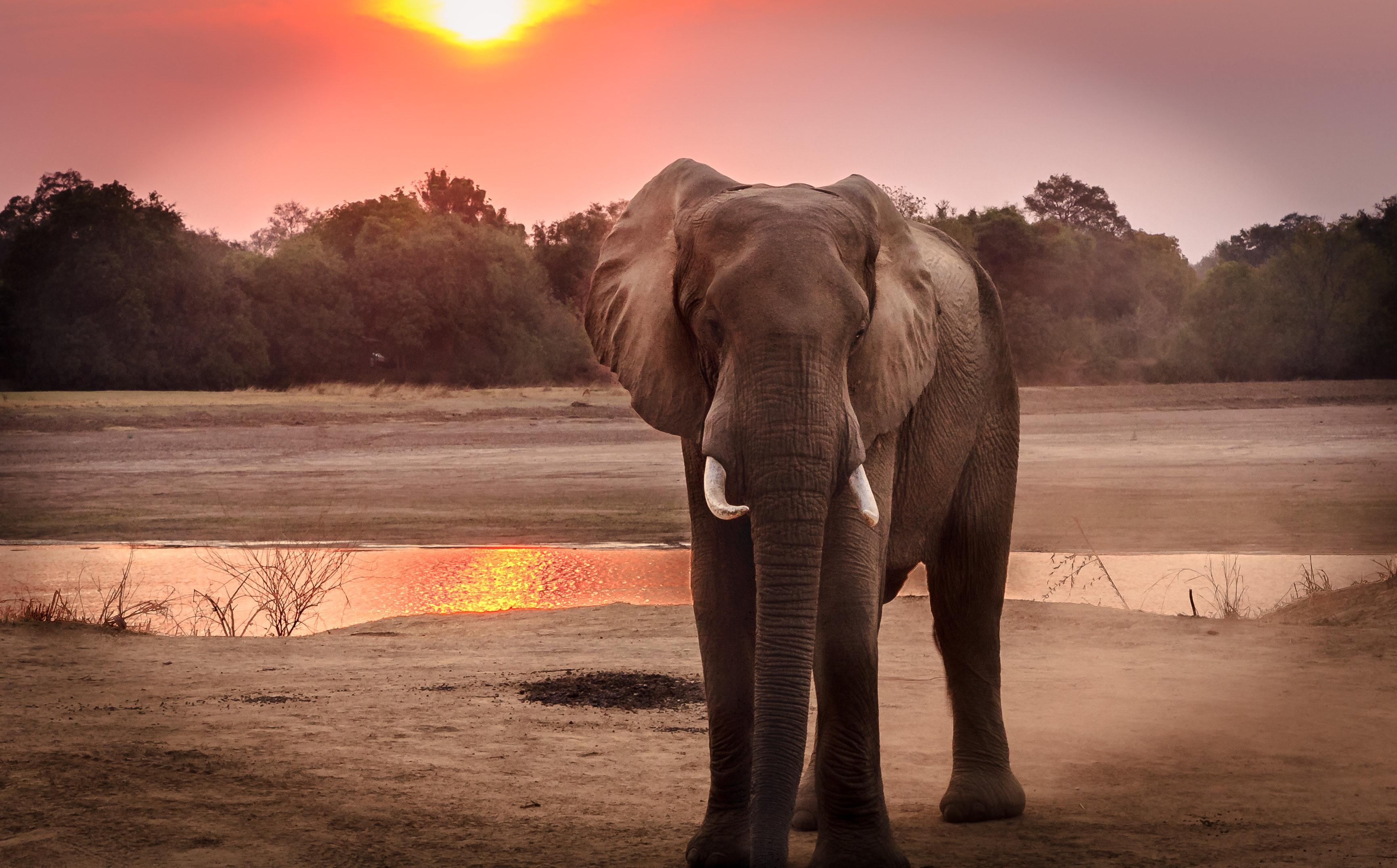 breathtaking elephant photos 183 pexels 183 free stock photos