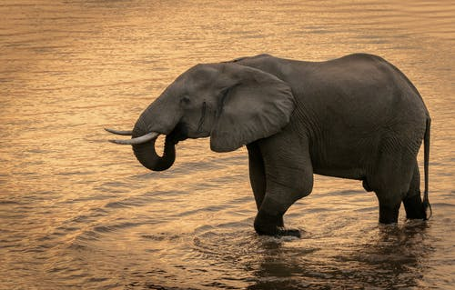An Elephant on the Water