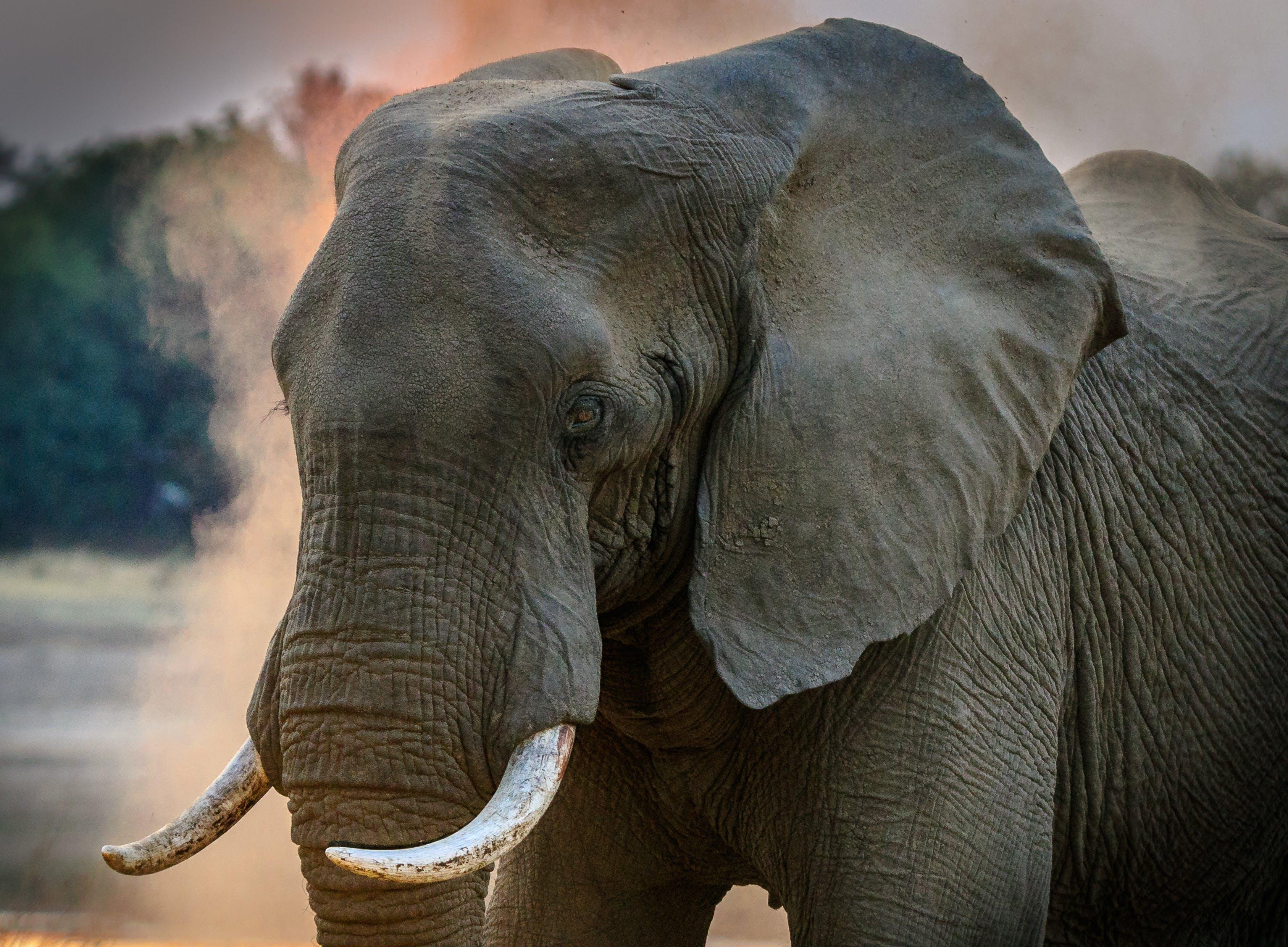 Základová fotografie zdarma na téma divoký, fotografování zvířat, kel, kmen