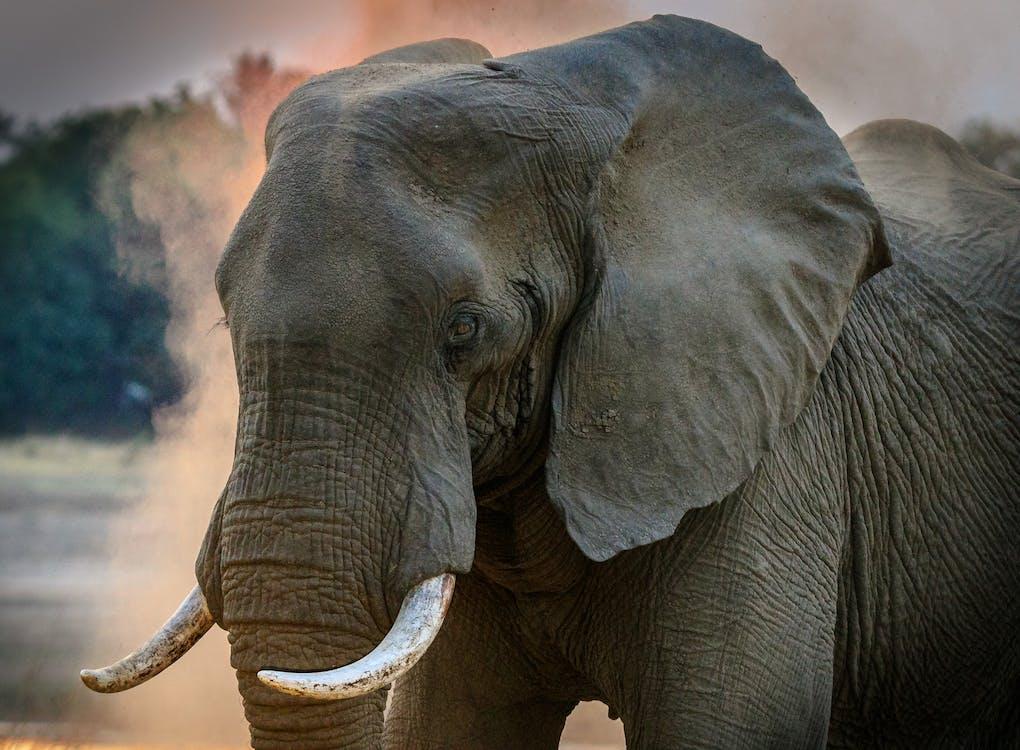 animal, défense, éléphant