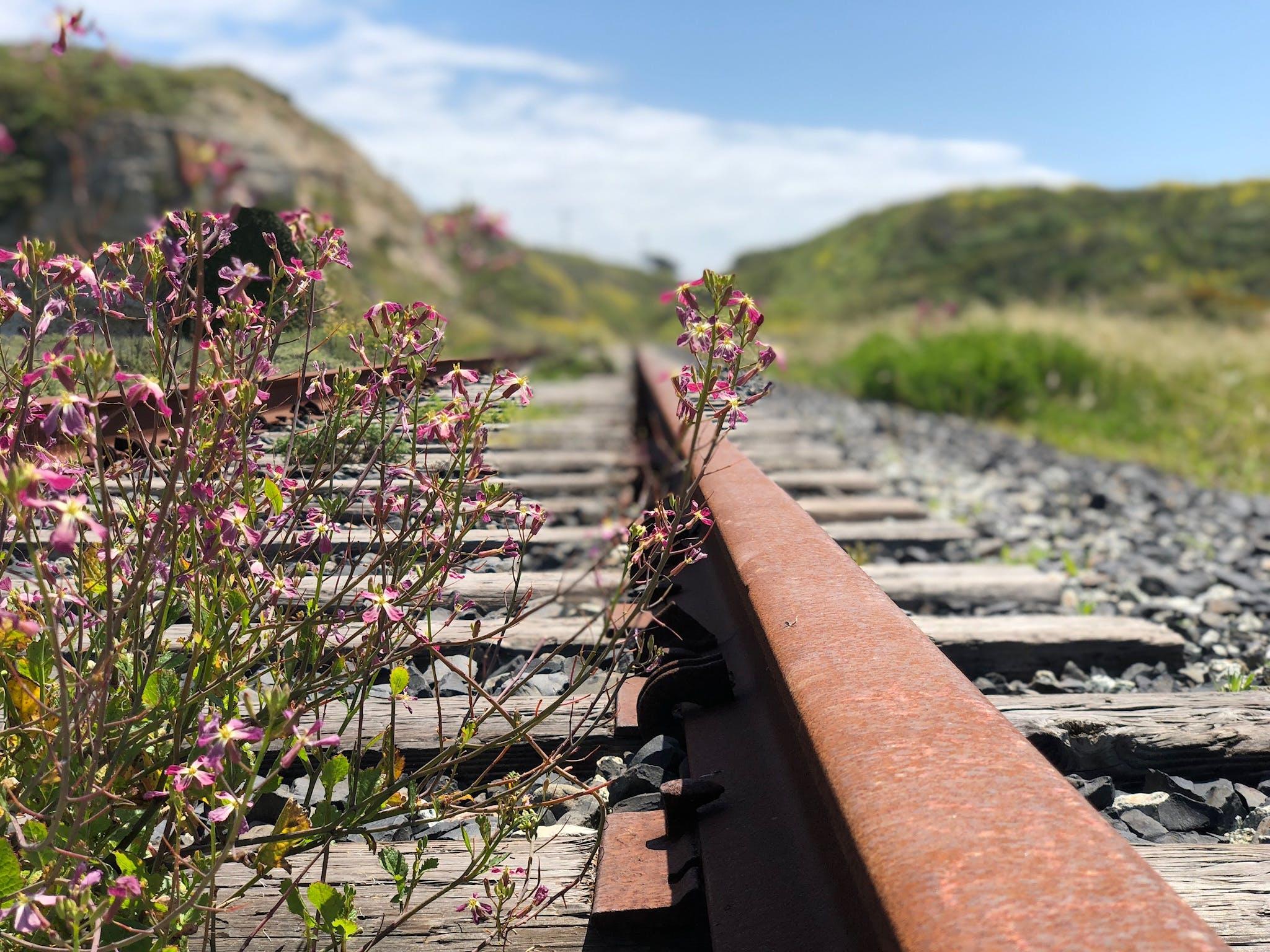 คลังภาพถ่ายฟรี ของ ความชัดลึก, ดอกไม้, ต้นไม้, ทางรถไฟ