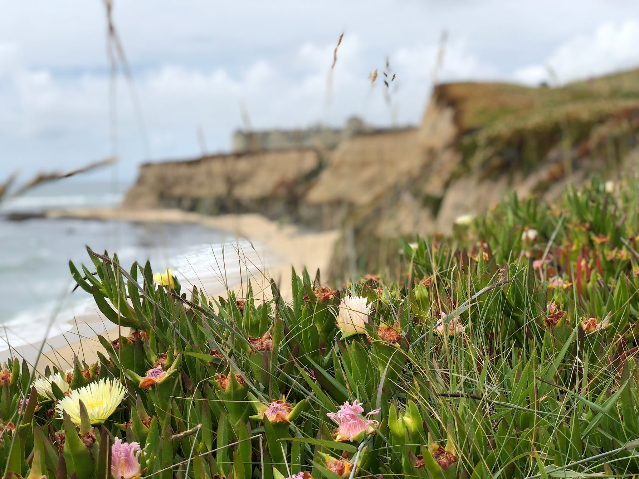 Free stock photo of cliffside, cornflowers