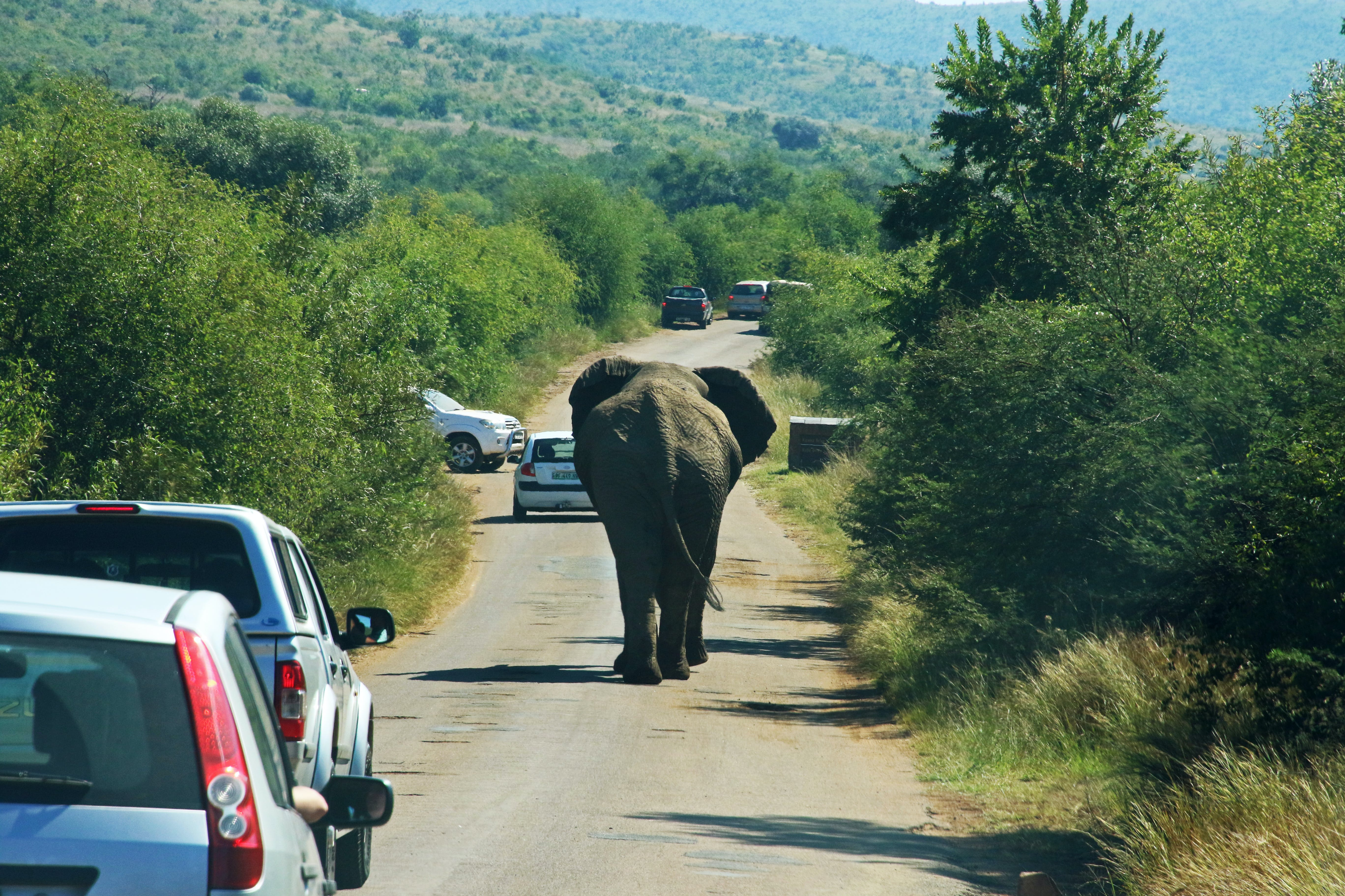 Photography of Elephant On Road