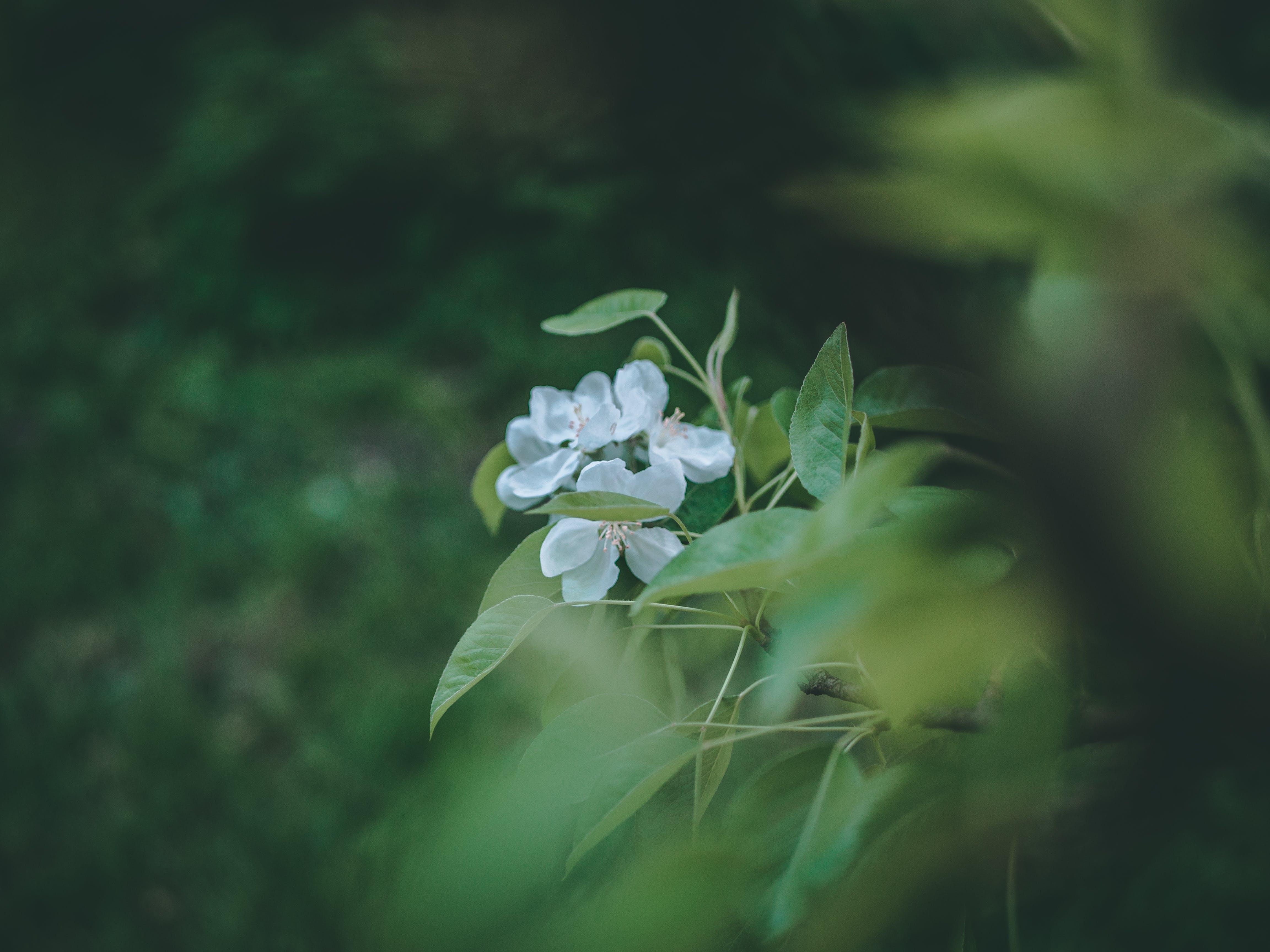 Kostenloses Stock Foto zu blätter, blühen, blumen, blütenblätter