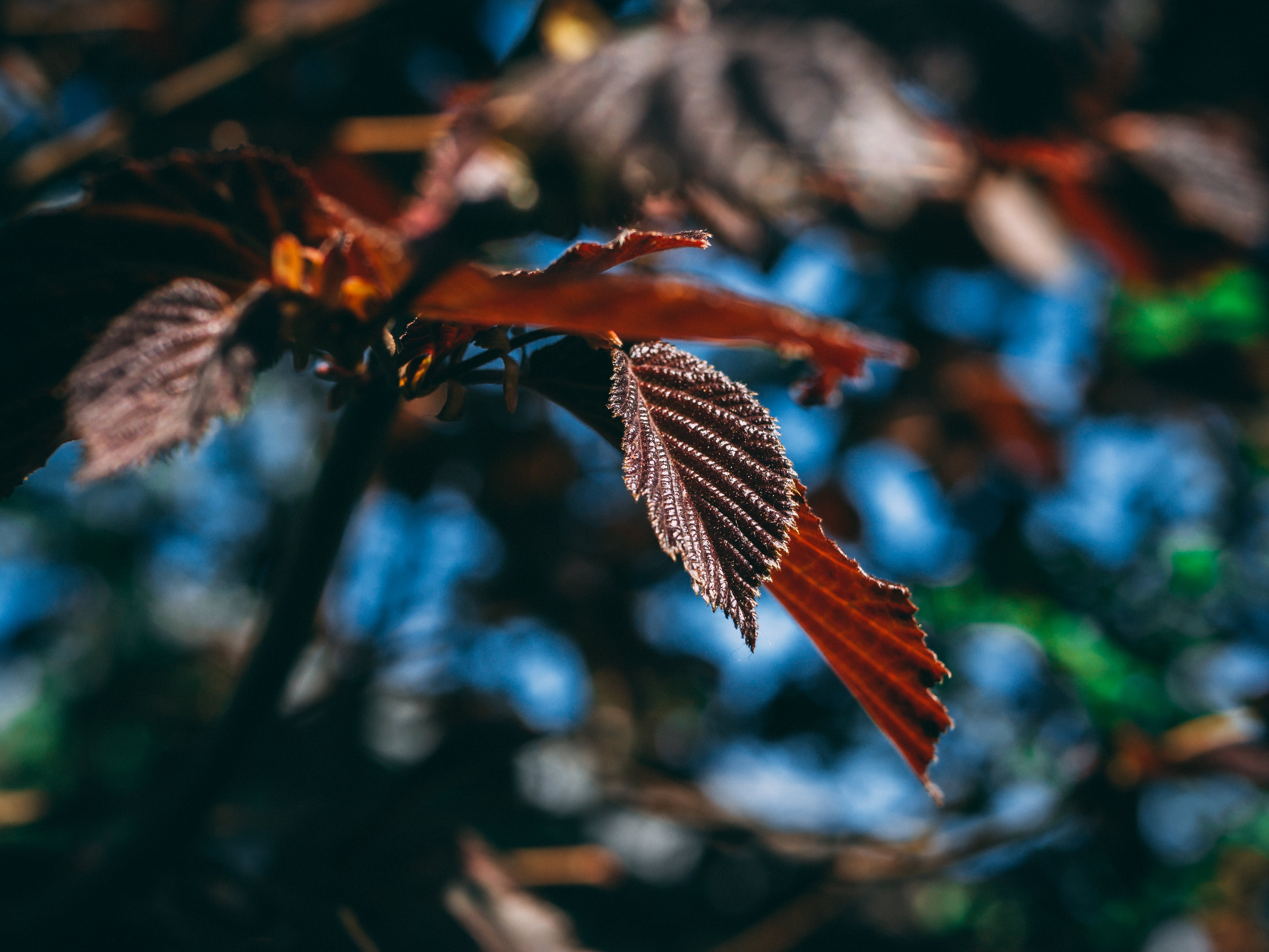 Close-Up Photography of Leaves