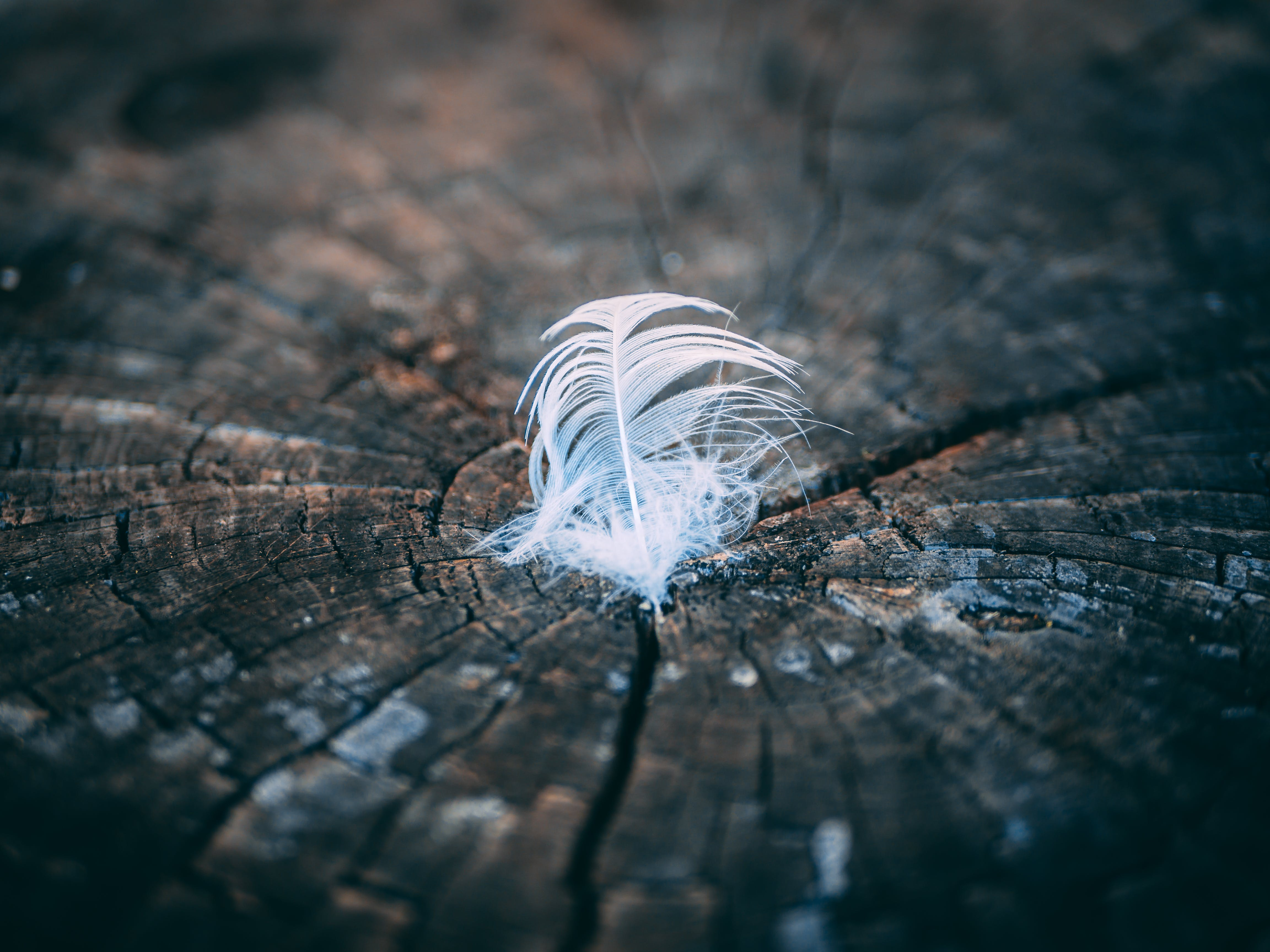Close-Up Photography of Feather on Tree Stump