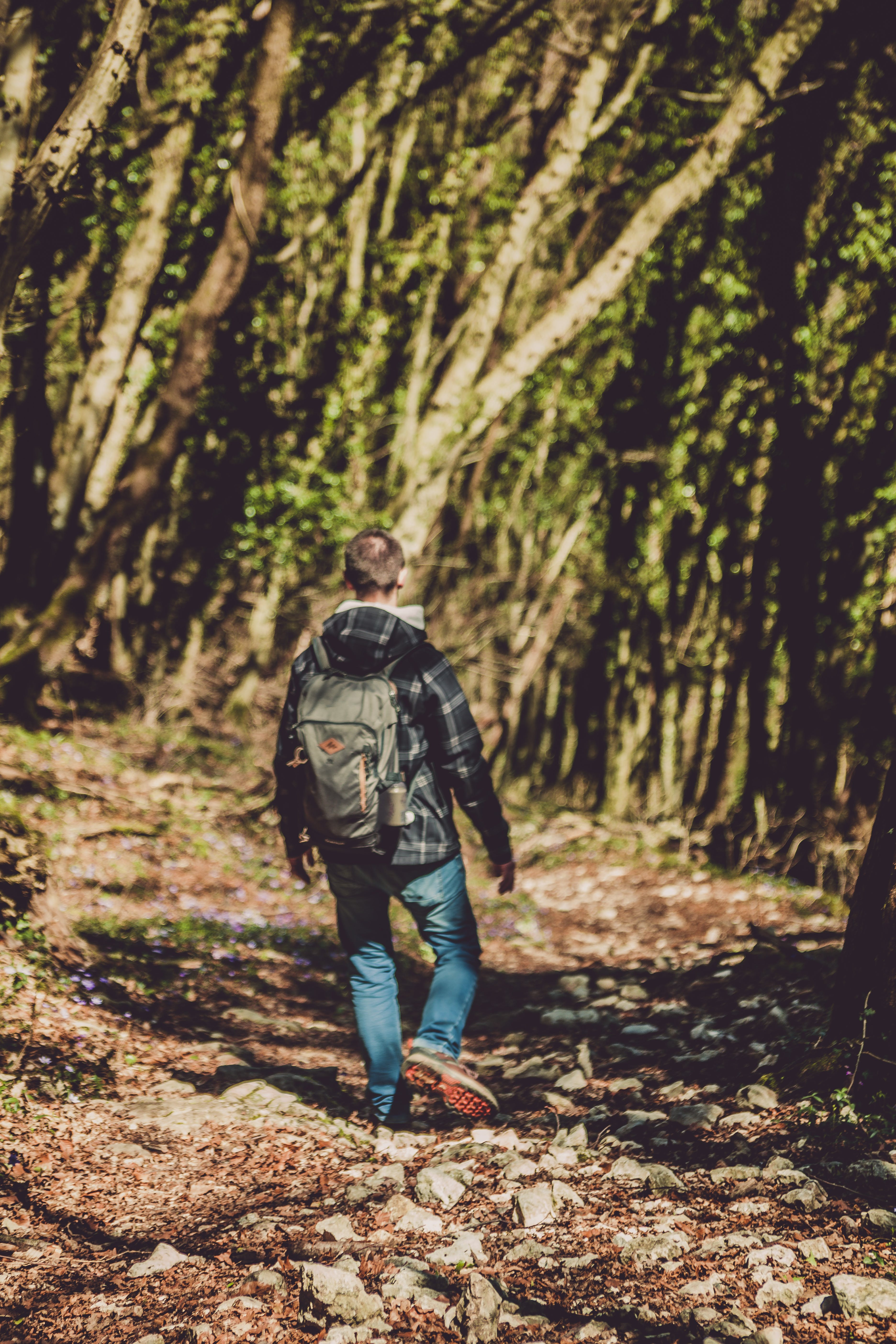 Photo of Man Walking in the Forest