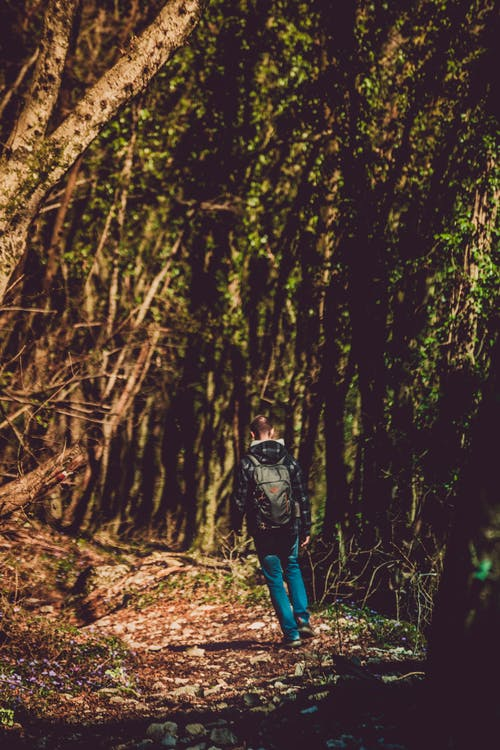 Kostenloses Stock Foto zu bäume, erholung, erwachsener, friedvoll