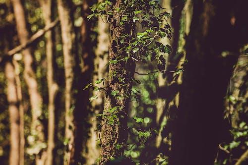 Foto stok gratis batang pohon, cabang, flora, kayu