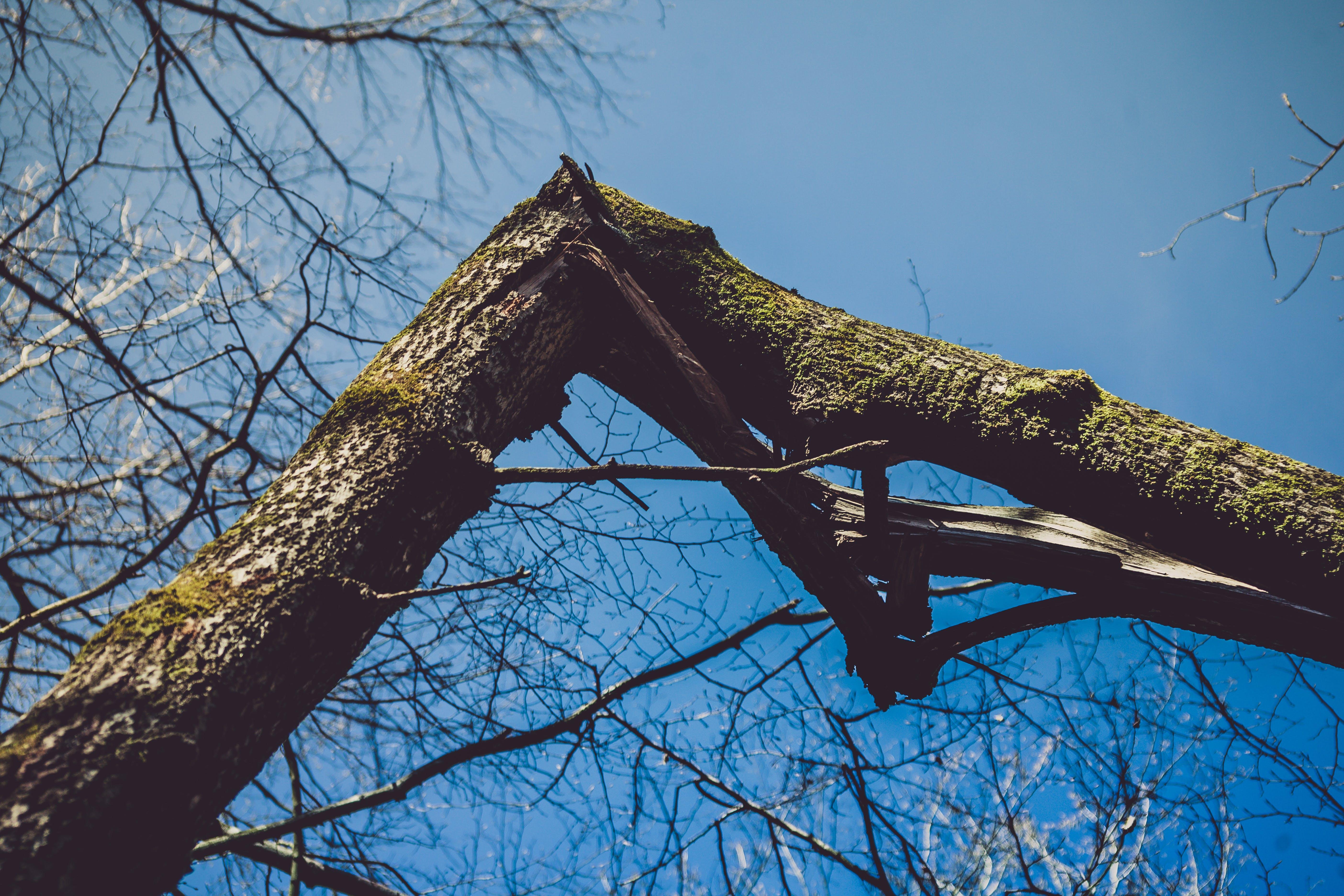 Photography of Broken Bough