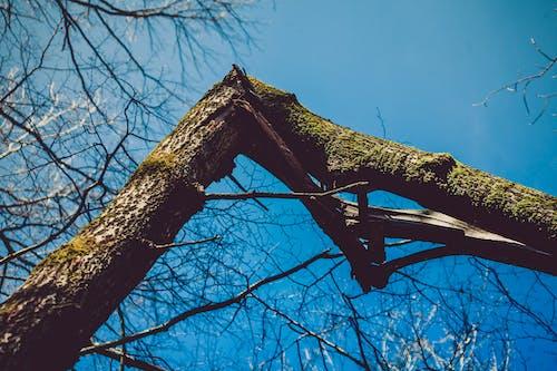 Gratis lagerfoto af dagslys, gren, landskab, miljø