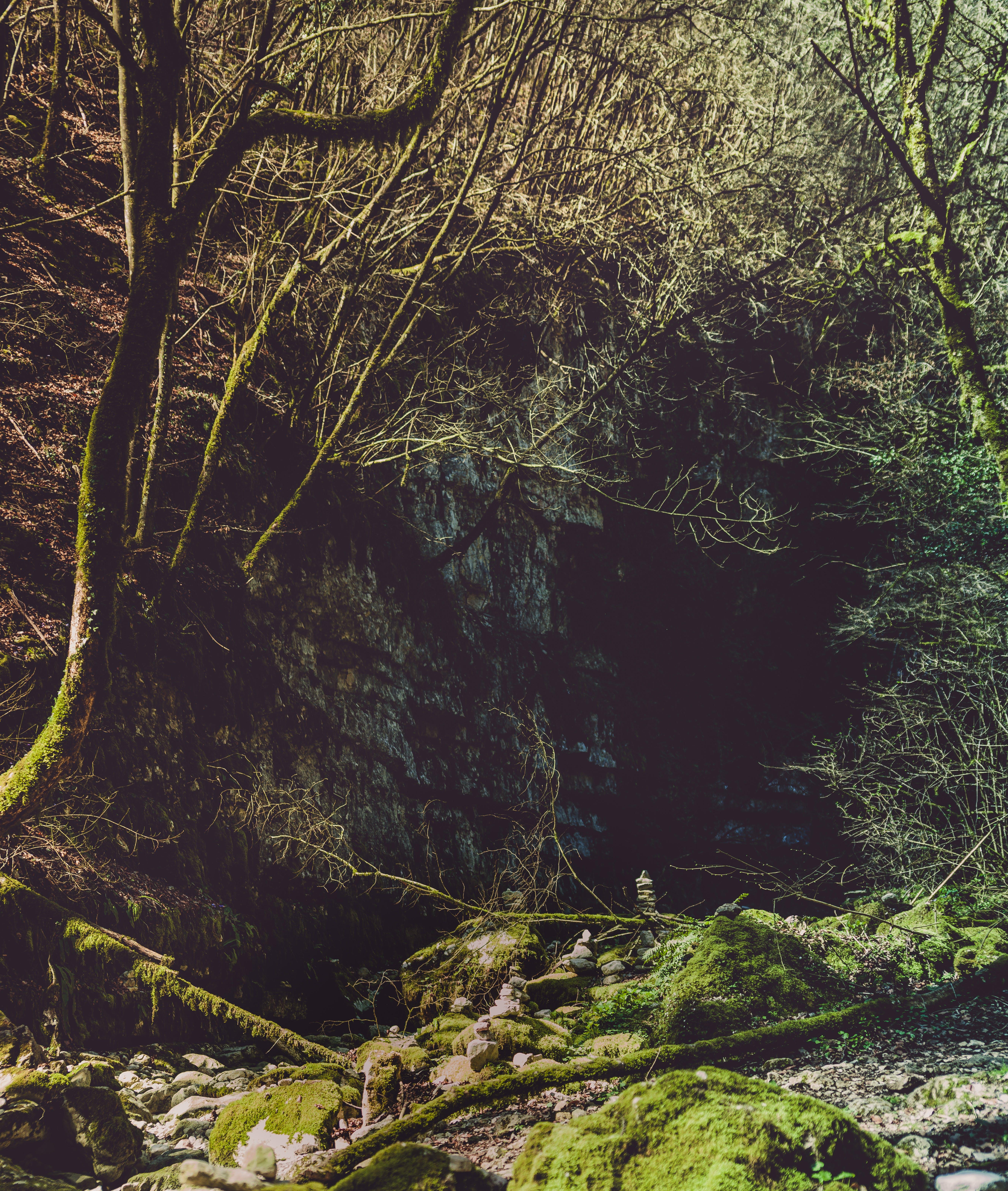 Gratis lagerfoto af grene, landskab, miljø, mos