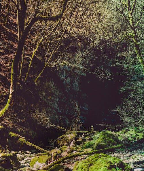 Foto profissional grátis de árvores, filiais, floresta, madeiras