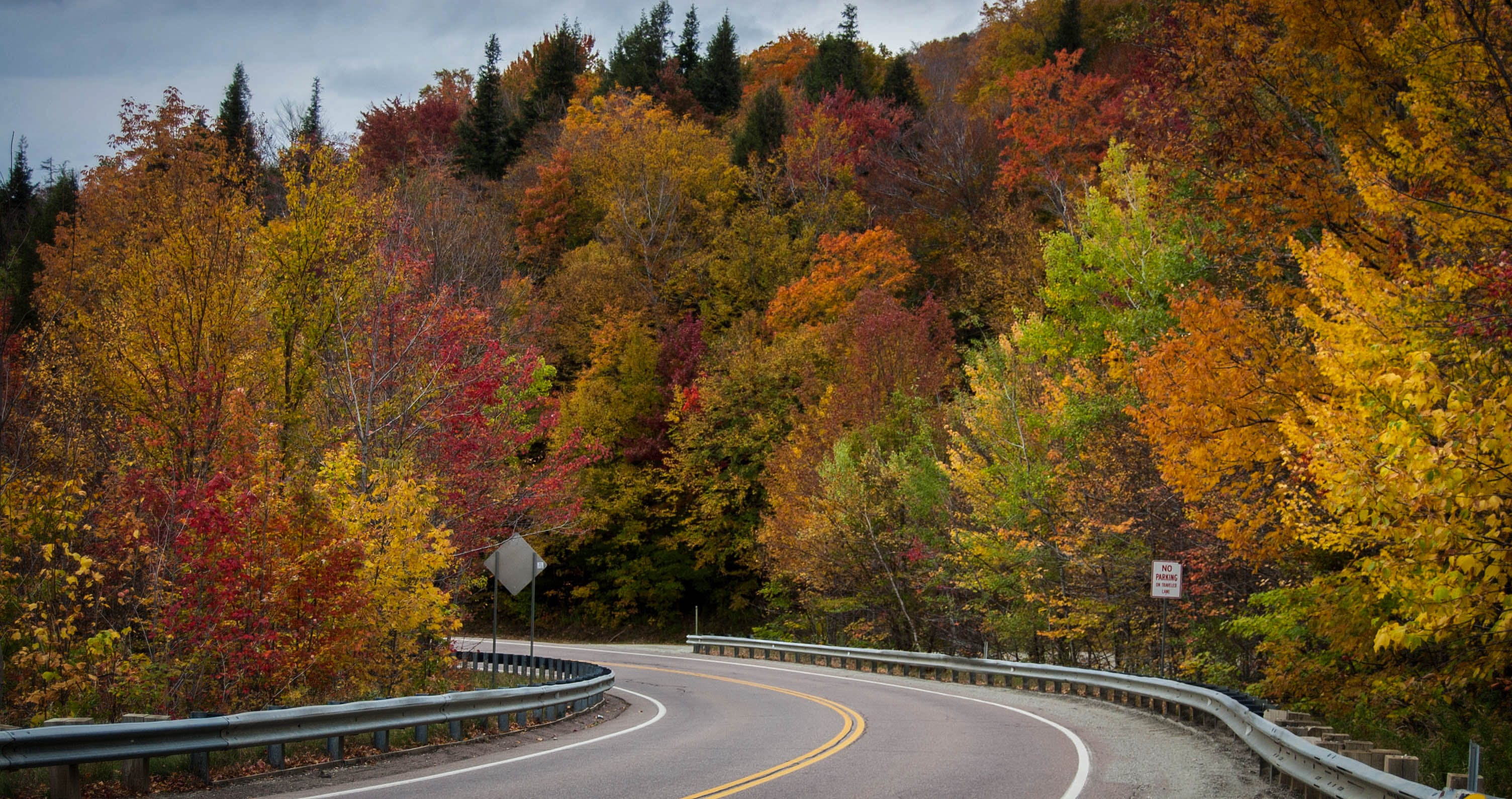 Free stock photo of colorful road, fall colors, fall foliage, fall leaves