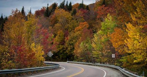 Immagine gratuita di colori autunnali, colori del vermont, fogliame autunnale, fondo stradale