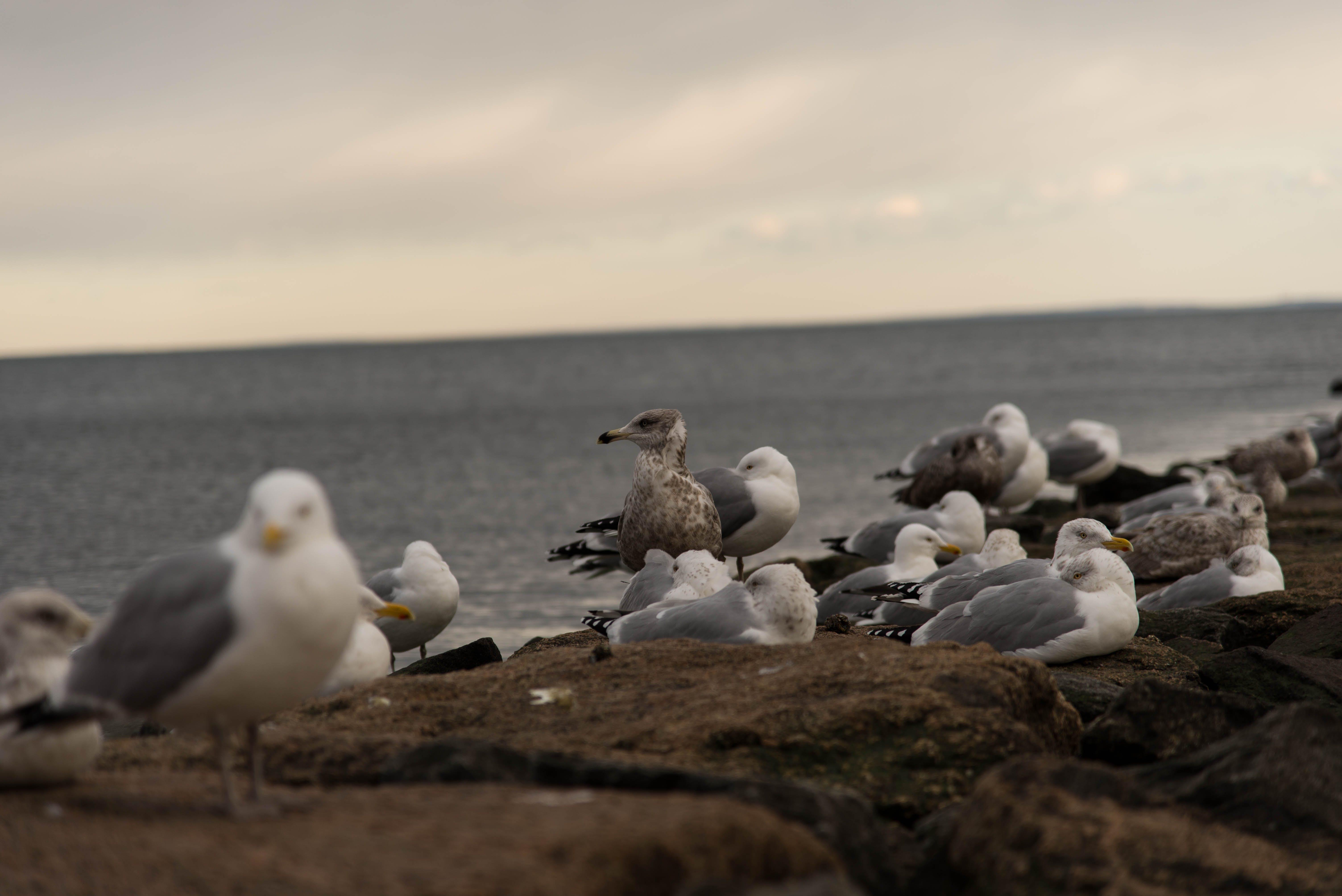 beach, birds, cold beach