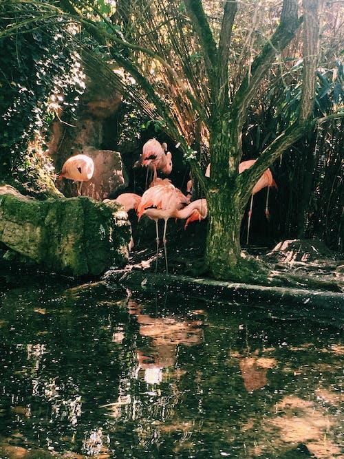 Darmowe zdjęcie z galerii z drzewa, flamingi, krajobraz, mech