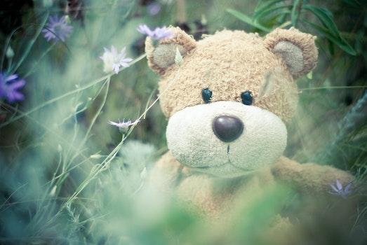 Kostenloses Stock Foto zu blumen, gras, teddybär, flora