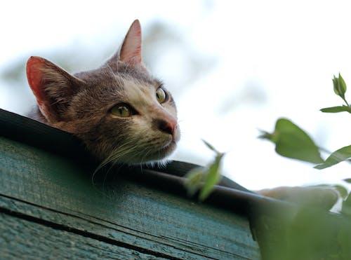 Ilmainen kuvapankkikuva tunnisteilla eläin, istua, kasvi, kasvot