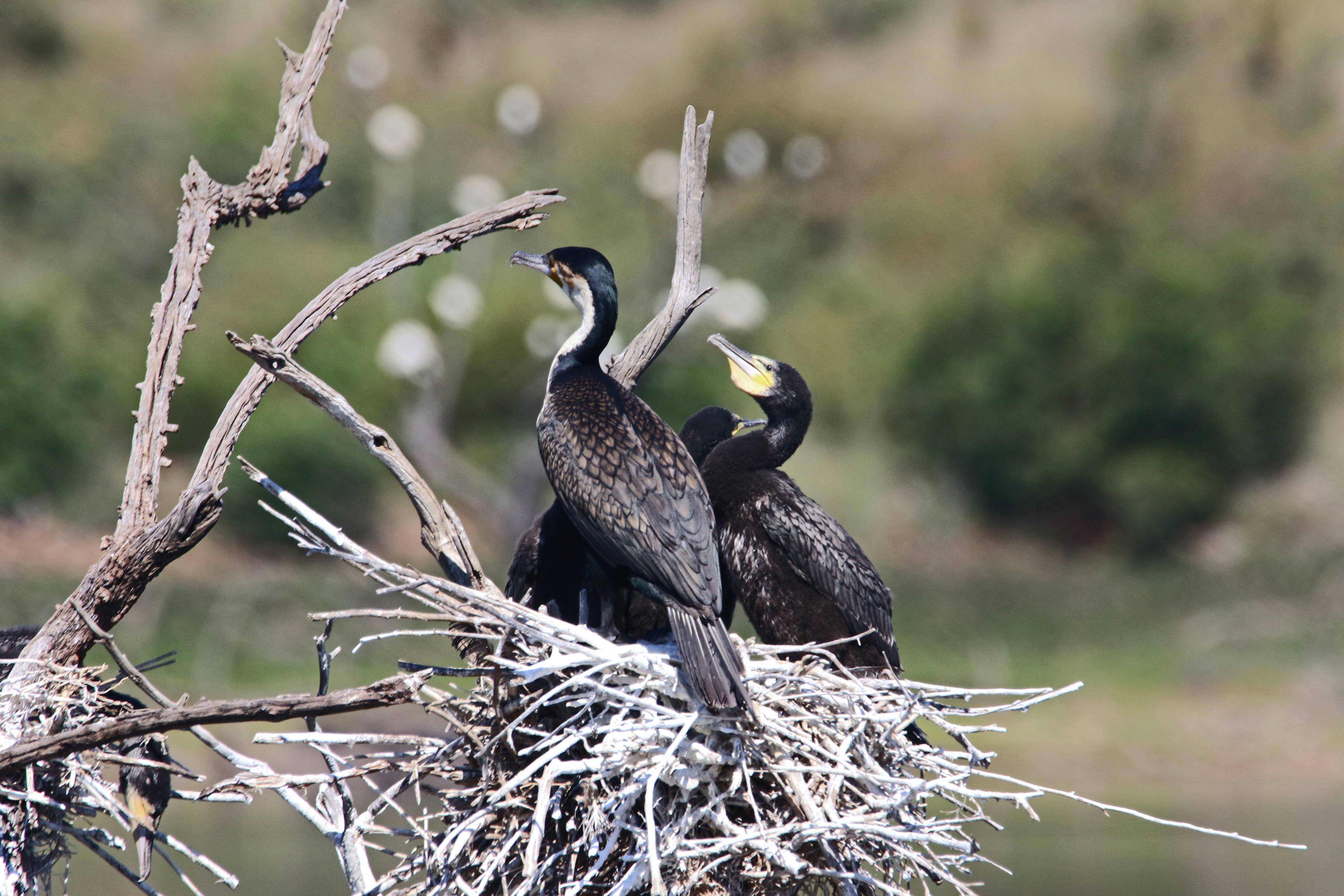 Fotos de stock gratuitas de ala, árbol, color, fauna