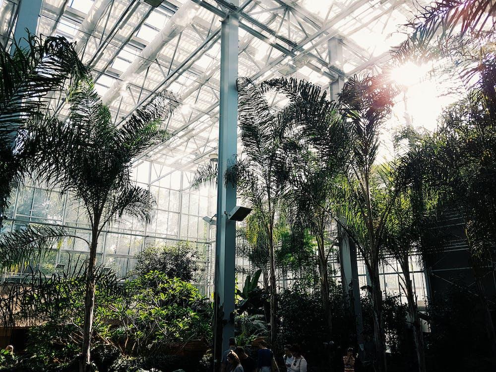 ต้นปาล์ม, พฤกษศาสตร์, สวน