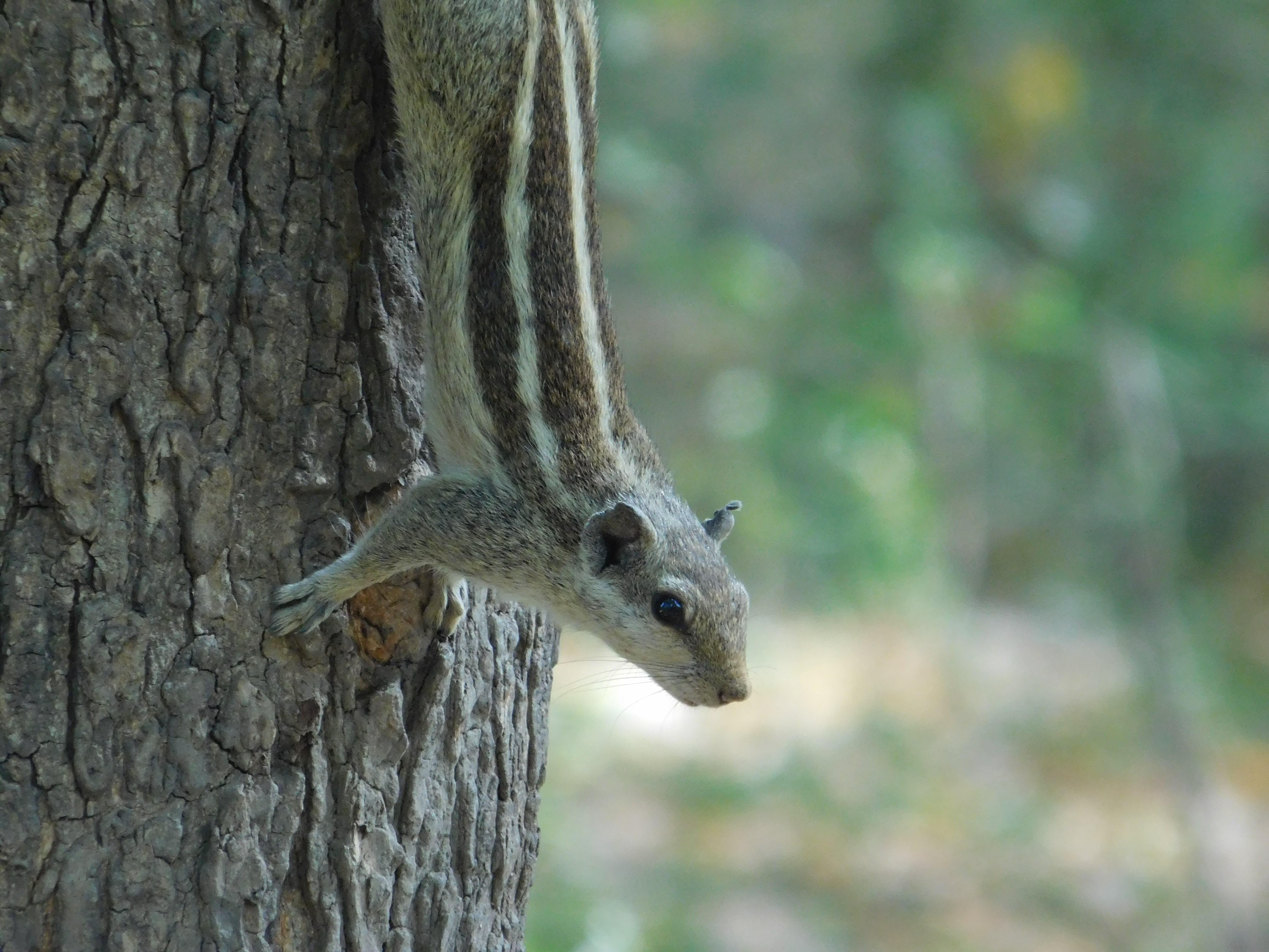 Brown and Gray Squirrel on Brown Tree Trunk