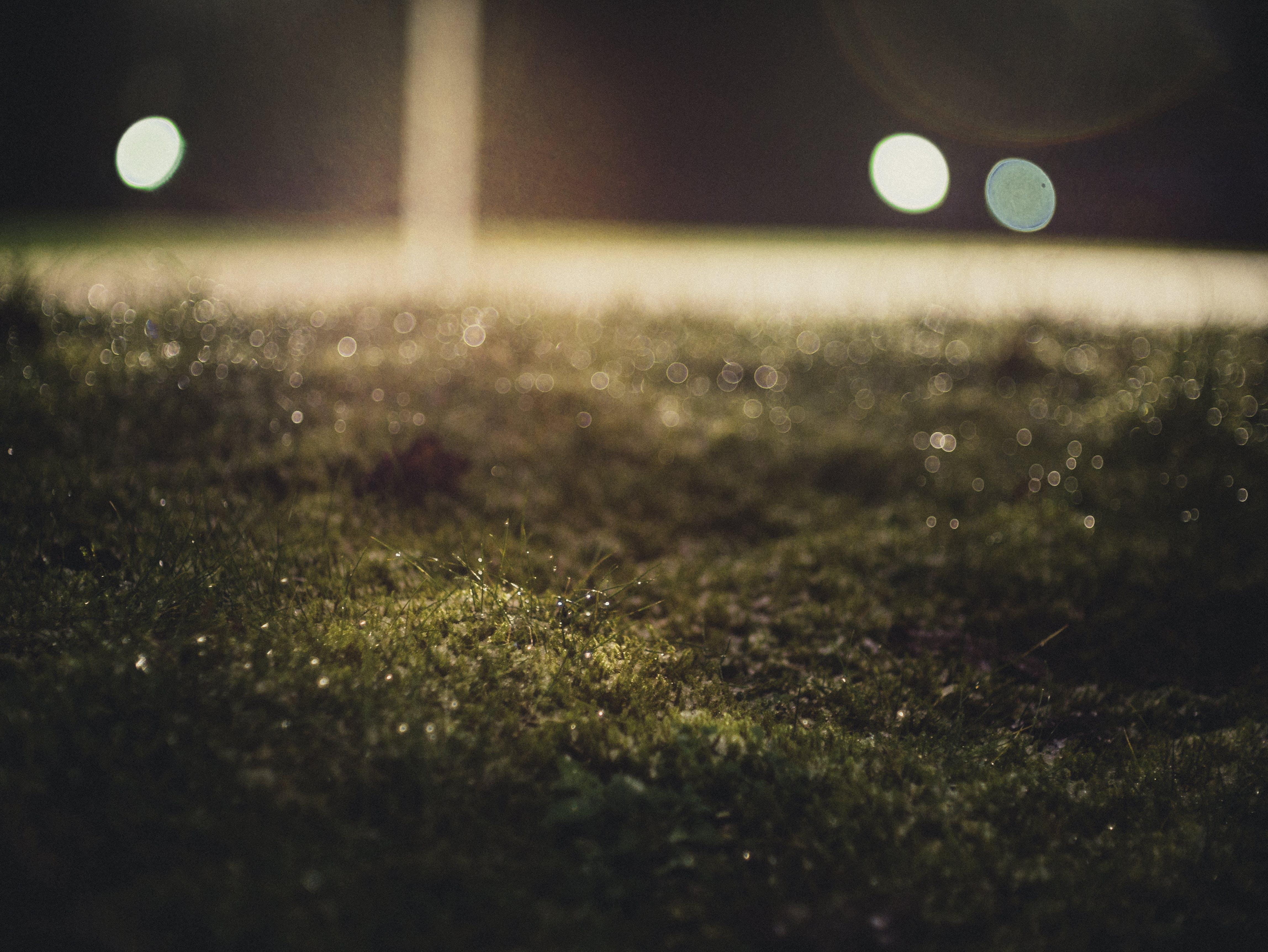 Free stock photo of grass, blur, bokeh, illuminated