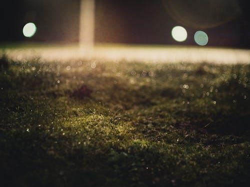 Ảnh lưu trữ miễn phí về cận cảnh, chiếu sáng, cỏ, hạt sương