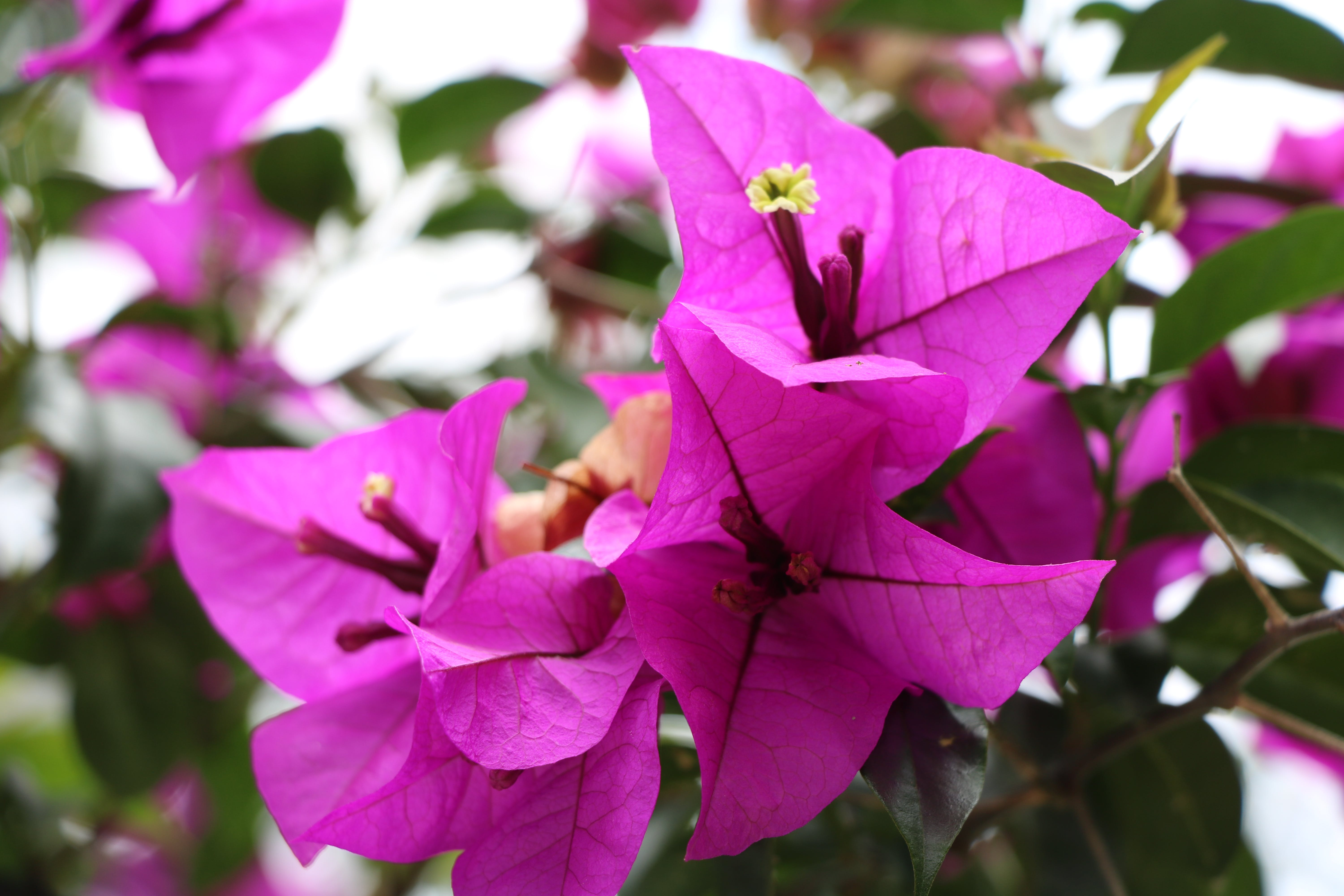 Close-Up Photography of Purple Flowers