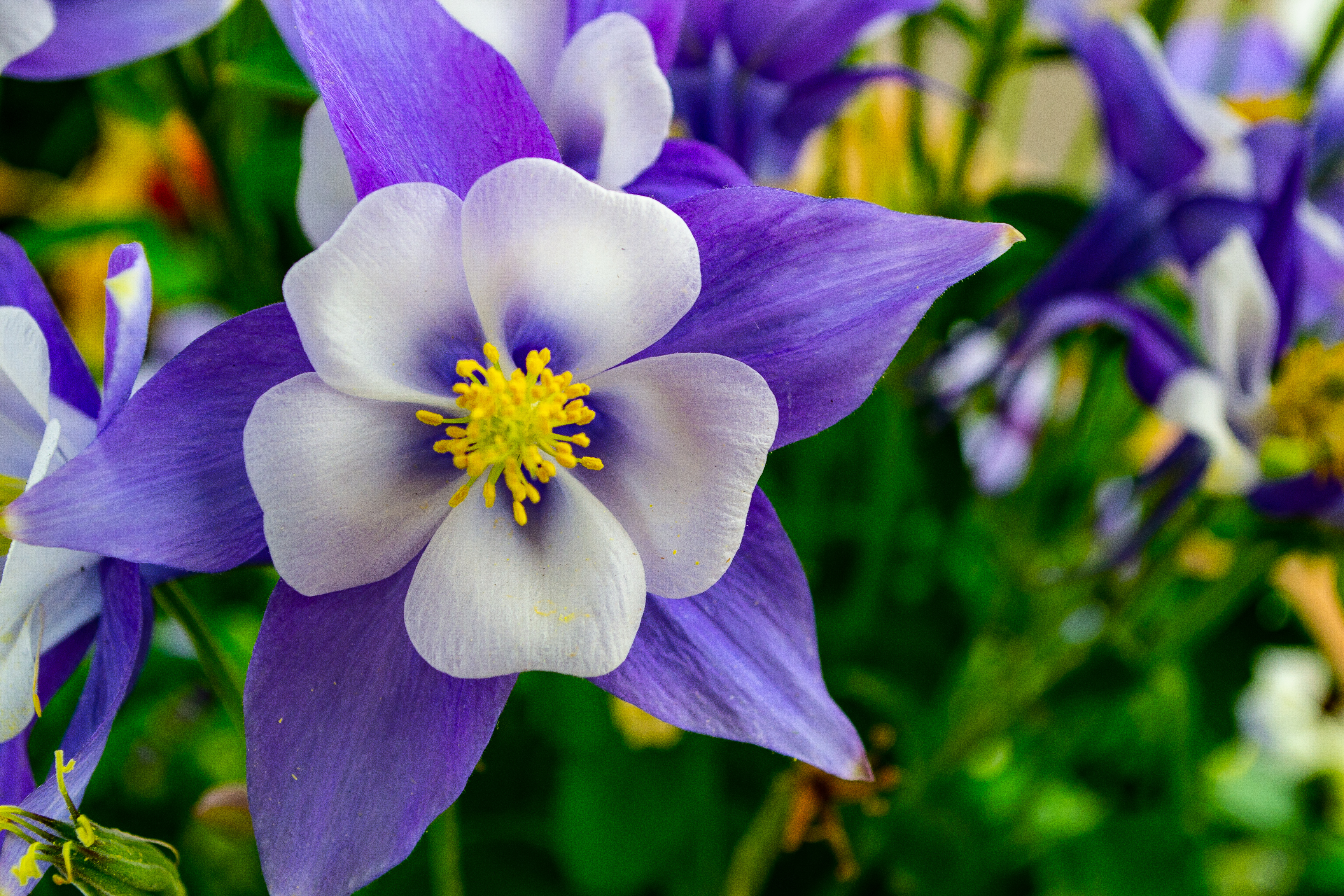 Shallow Focus Photography of White and Purple Flowers