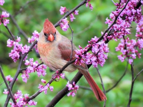 Fotos de stock gratuitas de árbol, bonito, cerezos en flor, cola