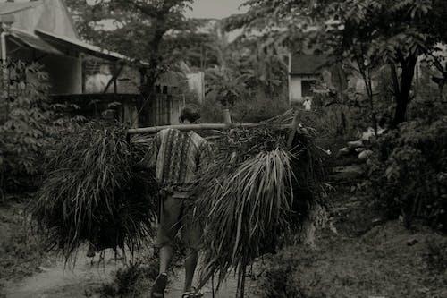 bw, vilage酒店, 人的内心, 在农民工作 的 免费素材照片