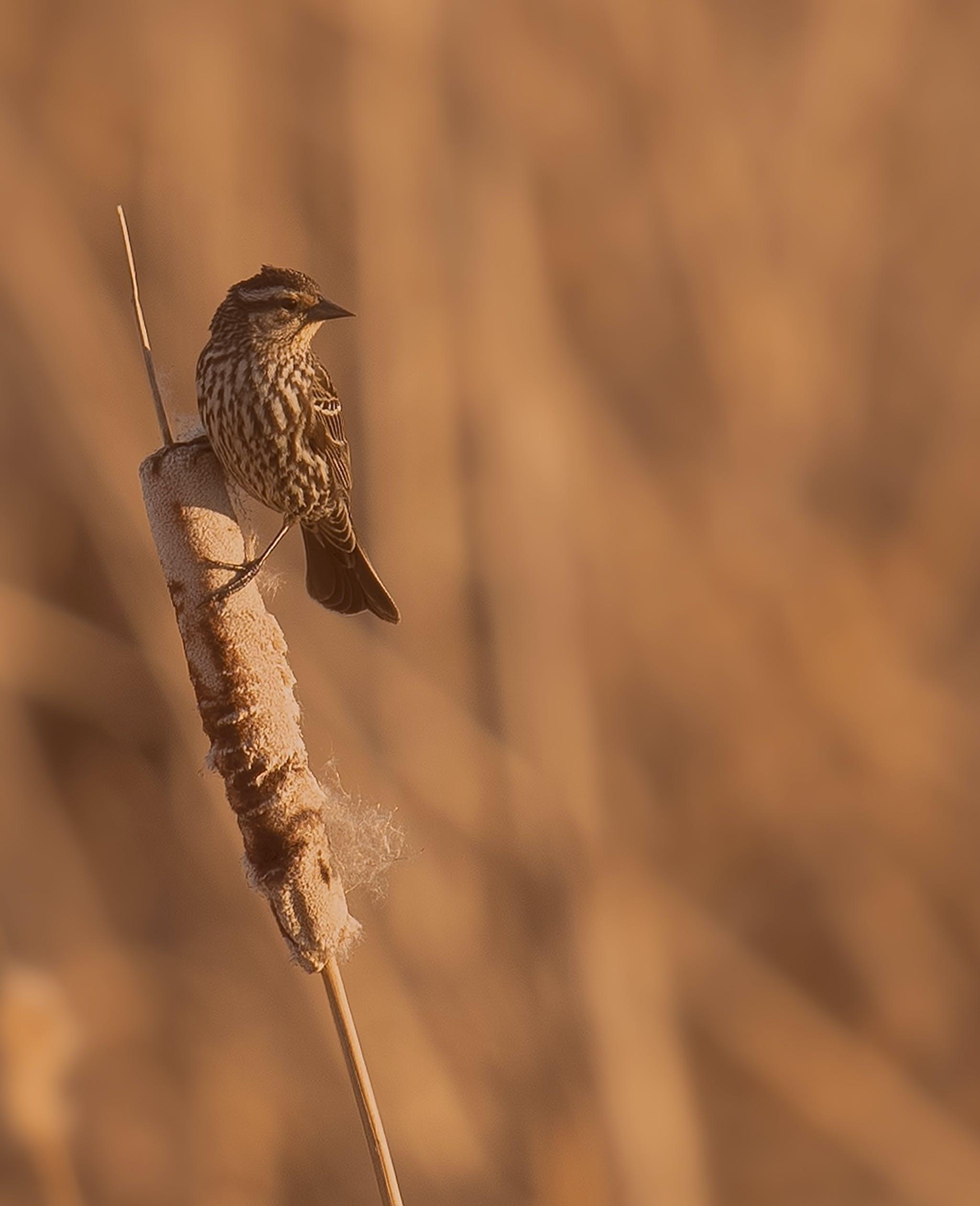 Kostenloses Stock Foto zu vogel, winter, tier, schnabel