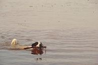 water, animal, dog